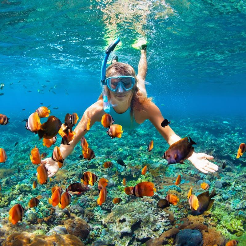 Kahaluu Beach Snorkeling Kona Seaside